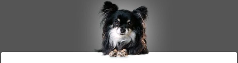 velge hund søker elskerinne